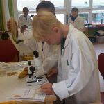 die Getreidekörner mit dem Mikroskop betrachtet