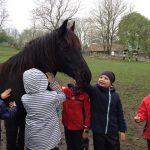 Pferde streicheln